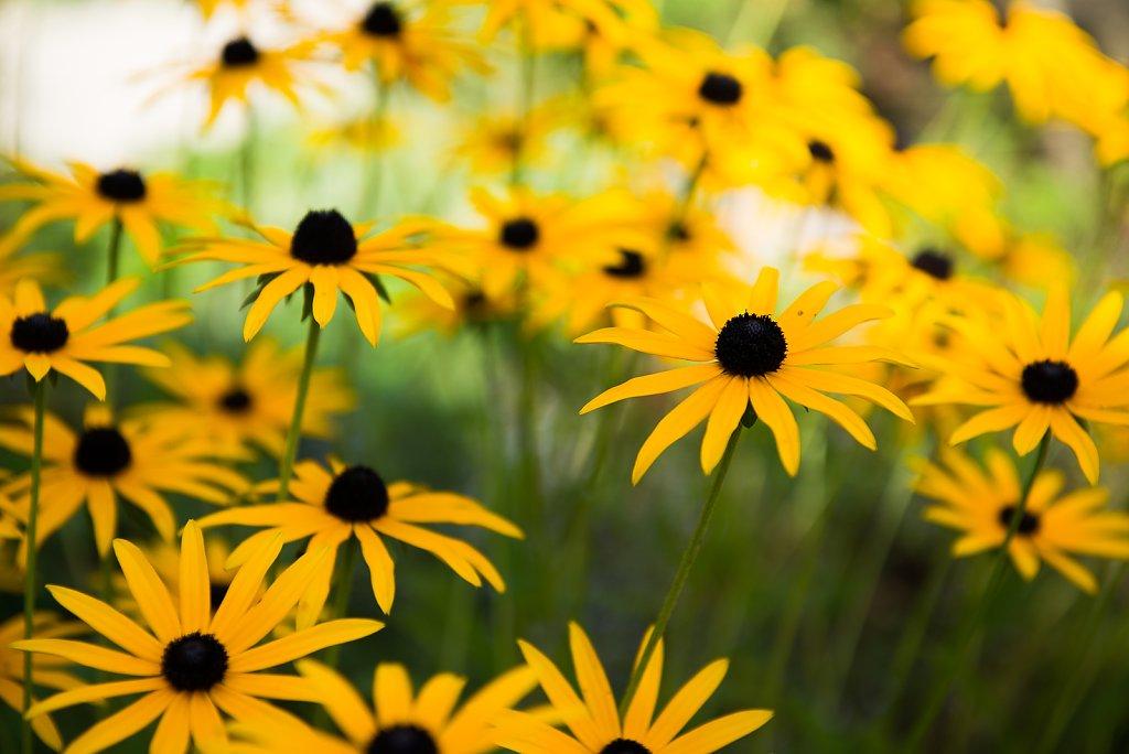 Blumen-2.jpg